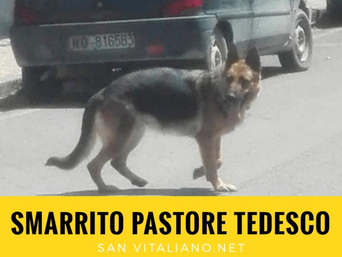 San Vitaliano, smarrito pastore tedesco
