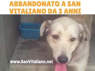 Abbandonato a San Vitaliano 3 anni fa, ora in canile e cerca casa