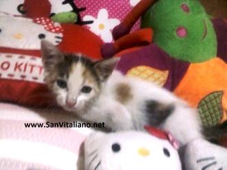 San Vitaliano, gattino gettato come un rifiuto: ora cerca casa