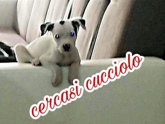 Cucciolo smarrito ed avvistato presso La Gerbera: aiutiamo la famiglia a ritrovarlo: condividete!