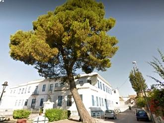 Tragedia a Napoli per un pino caduto: il nostro, invece, è in sicurezza?