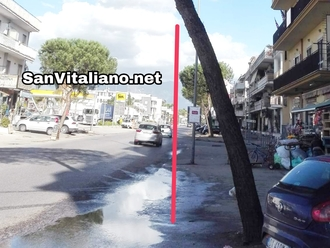 San Vitaliano, pino inclinato su via Nazionale: regge?