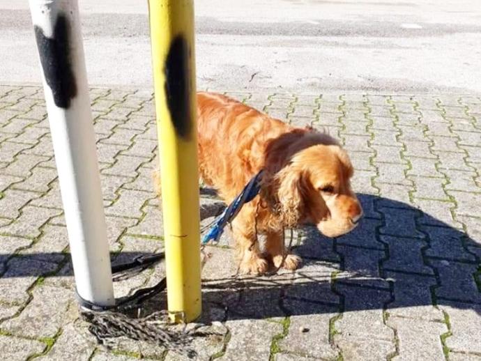 San Vitaliano, cane trovato in strada: si cerca il padrone