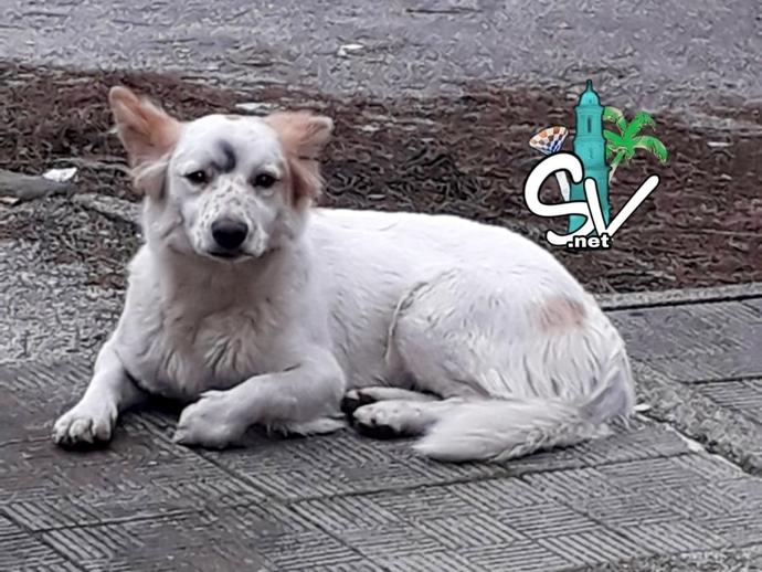 Cane smarrito, da un paio di giorni in zona Cellini: cercasi padrone !