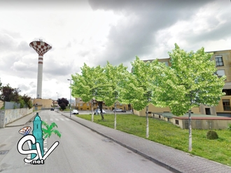 San Vitaliano, Ricetta antiPm10: in arrivo 8.000 euro di alberi mangia inquinamento