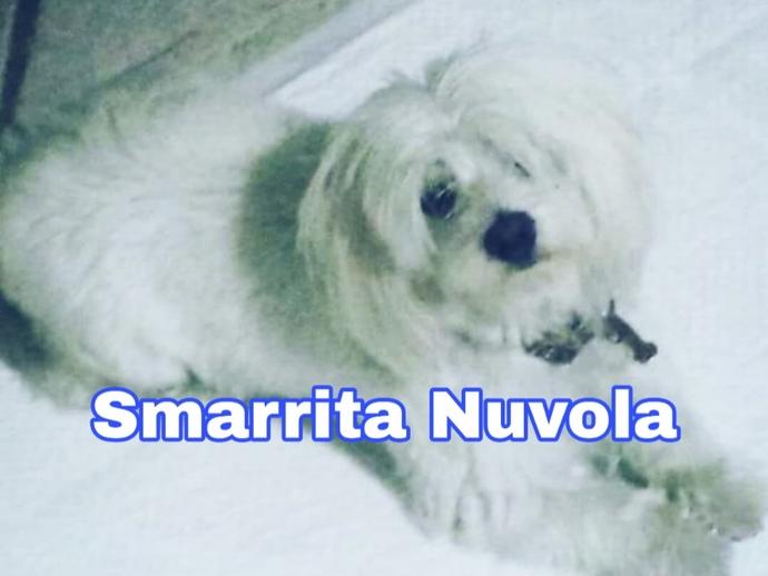 San Vitaliano, smarrita Nuvola: aiutiamola a ritrovare la sua padrona