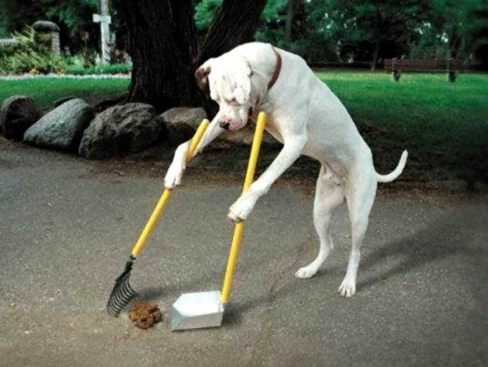 San Vitaliano, deiezioni canine in strada: gente incivile! Ecco la segnalazione di un concittadino