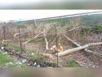 Autostrade spenna San Vitaliano: recisi gli alberi di Via dei Cavalli. La rabbia dei residenti