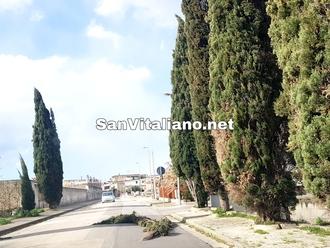 San Vitaliano, pericolo sulla via del cimitero: il vento stacca ramo del cipresso