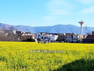 Campi sanvitalianesi : scene bucoliche sempre più rare