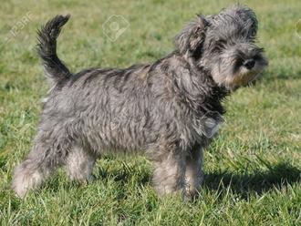 San Vitaliano, smarrito Luppolo: è ancora un cucciolo, aiutateci a cercarlo !