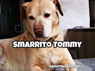 San Vitaliano, smarrito Tommy da Piazza Tofano : Aiutiamo la famiglia a ritrovarlo !