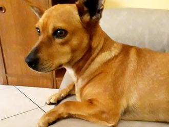 San Vitaliano, cane smarrito ed accolto in casa da una concittadina: padrone dove sei?