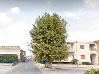 San Vitaliano, il grande albero invita ad essere in pace con Dio: trovata poesia sul suo tronco