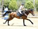 San Vitaliano, una chiacchiera con Rosita Spiezia, campionessa regionale di equitazione