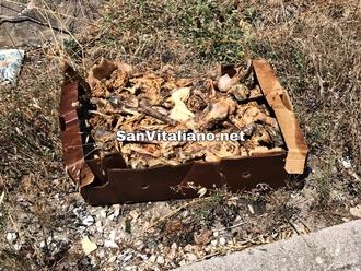 San Vitaliano, carcasse lasciate in strada: odore nausea residenti