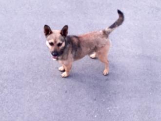 San Vitaliano, cane smarrito in zona Bar La Delizia: aiutiamolo a ritrovare la famiglia