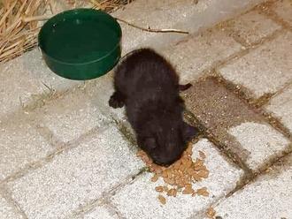 San Vitaliano, cucciolo di gattino abbandonato cerca casa: urgente