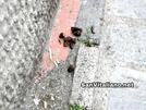San Vitaliano, Via Petrarca zozza: padroni portatevi il sacchetto per i vostri cani!