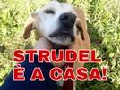 San Vitaliano, trovato il cane sparito a Natale: Strudel è finalmente tornato a casa!