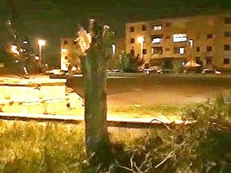 San Vitaliano, strage di alberi: ridotti in anemici tronchi diverse piante della comunità