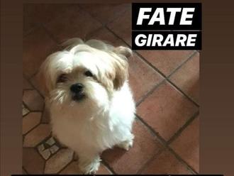 Ritrovato ( un attimo) a Gragnano  il cane smarrito ieri a San Vitaliano: Whisky riabbraccia i suoi