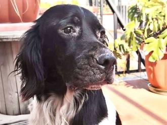 San Vitaliano, adotta un cane a Pasqua: le sue parole ci hanno riempito il cuore...