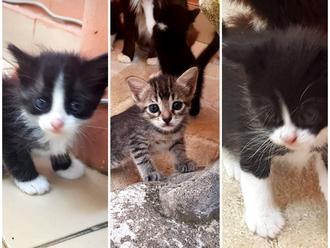 San Vitaliano, gattini cercano casa: adottali !