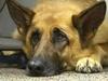 Sapete che San Vitaliano mantiene in canile 17 cani randagi per migliaia di euro all
