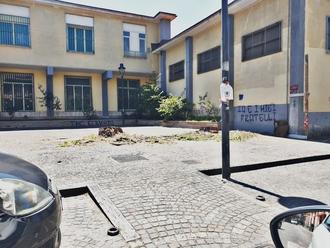 San Vitaliano, il Comune: i Pini di via Appia compromessi, andavano abbattuti