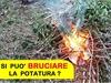 San Vitaliano, si può bruciare la potatura? NO!