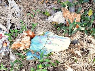 San Vitaliano, polli morti gettati in Via Vecchioni: cibo per topi e serpenti