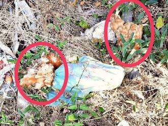 San Vitaliano, individuato il responsabile: eliminati i polli morti gettati in via Vecchioni
