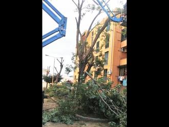 San Vitaliano, comparto edilizia popolare: al via la potatura degli alberi