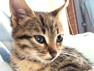 San Vitaliano, gattina abbandonata cerca casa: ha pochi giorni