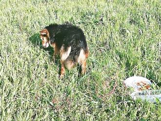 San Vitaliano, cane smarrito ( o abbandonato): è cieco e forse sordo. Aiutiamolo!