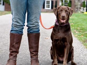 Portate al guinzaglio i cani (grandi o piccoli che siano): abbiate rispetto di chi ne ha paura