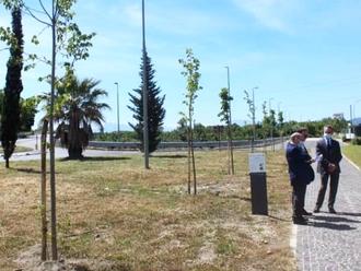 Il Rotary dona a San Vitaliano 25 tigli antinquinamento: sabato scorso la piantumazione in paese