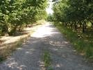 San Vitaliano, fare jogging tra i nocelleti di via Selva: 2,5 km di sport tra la bellezza della natura