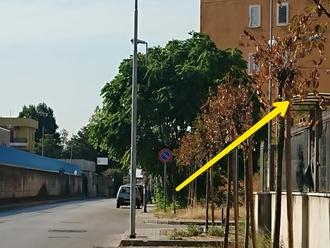 Verde Pubblico a San Vitaliano, poveri alberelli da poco piantati ( via Liberato Spiezia)