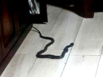 San Vitaliano, paura al rientro dalle vacanze: trova un serpente in bagno